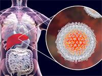 Hepatitis C related DOI Journals