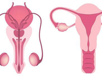 Advanced Research Areas in Reproductive System