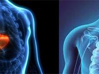 Portopulmonary Hypertension Quality articles