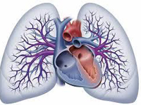 Peer reviewed research in Persistent Pulmonary Hypertension