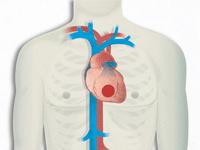 Scientific Papers on Ischemic Heart Disease
